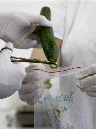 Laboratory workers take samples from a cucumber for a molecular biological test in Brno, Czech Republic.