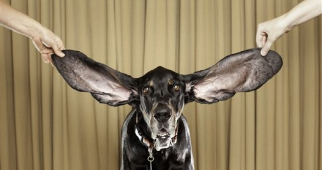 Dog sets 'longest ears' record with over 65 cm of ears