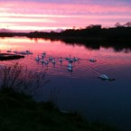 Lough Lannagh, Castlebar (Photo: Rowena Gillespie)