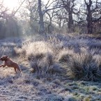 A dog frolics in on a frosty morning in East London. (AP)