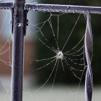 A frosty fence railing supports a spiderweb in Manette, Washington. The spider herself appears to have retreated from the icy morning.(AP Photo/Kitsap Sun, Larry Steagall)