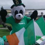 An anonymous person sent us this photo of a panda dressed as a leprechaun in Ballyheigue, Co. Kerry. We especially like that the panda has even gone to the effort of wearing a fake beard for the day. 