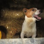 Another dog found in Co Laois