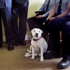 Pictured is 'Angel', taking a front row seat at the ceremony. Photo: Mark Stedman/Photocall Ireland