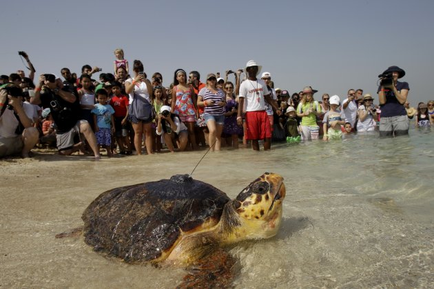 Mideast Emirates Tracking Turtles