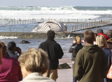 Crowds gathered at the rock pool in Newport today.
