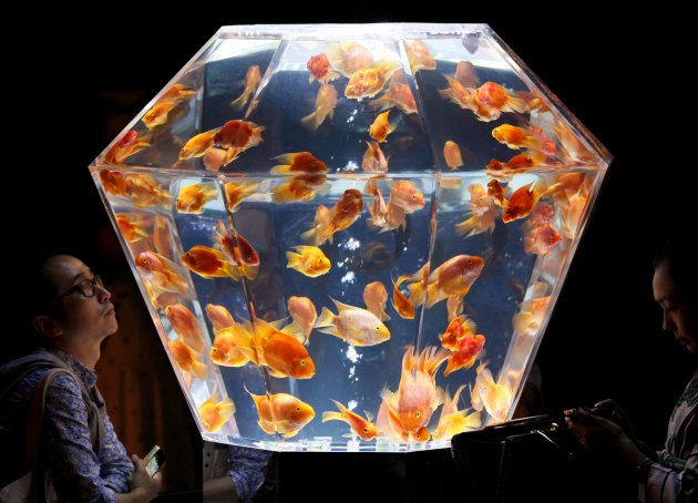 Japan Art Aquarium