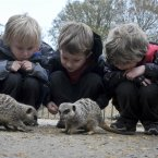 Kids and meercats. Just so much cute.