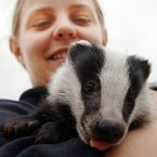 Wildlife Officer Dawn Phelps holds an 11-week old orphaned badger that was cared for at Gloucestershire Wildlife Rescue Centre during 2006. He then moved onto 'Secret World' in Somerset where it joined other badgers in a similar situation and as a group they were released into the wild somewhere in England later that year. PA photo Barry Batchelor