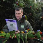 Curator of Birds Nigel Simpson counts Rainbow Lorikeets at Bristol Zoo Gardens during the annual stocktake. 