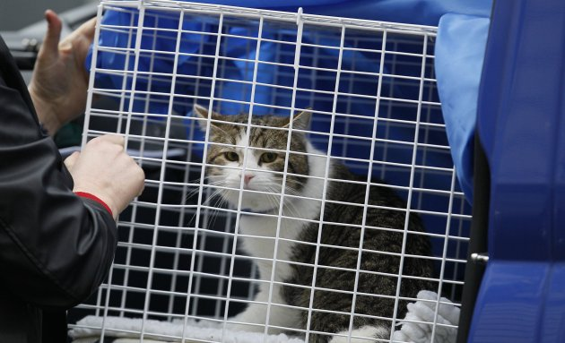 Britain Downing Street Cat
