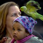 This kid. Totally unperturbed by the parrot on her head. All in a St Patrick's day in Bucharest seemingly. (AP Photo/Vadim Ghirda)