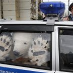 A Greenpeace activist, dressed as a polar bear, sits inside a police car after being detained outside Gazprom's headquarters in Moscow. Russian and international environmentalists are protesting against Gazprom's plans to pioneer oil drilling in the Arctic. (AP Photo/Misha Japaridze)