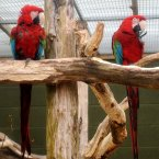 Parrots at Trotters World of Animals in Cumbria.