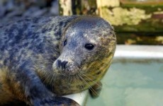 Eight seals found dead on beaches in the South East