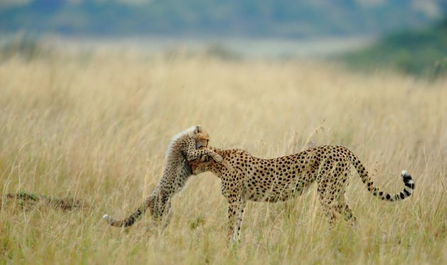Tender Moment - 2012-10-14_162366_nature.jpg