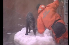 Happy ending: Sailors rescue dog from floating ice