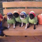 Pugs, not drugs. 