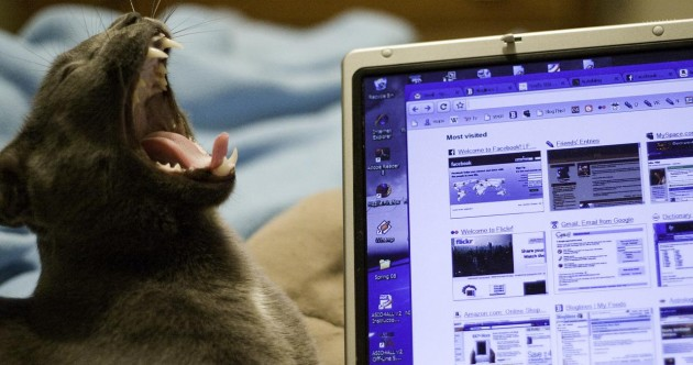 Own a laptop and a cat? Is this happening to you right now?