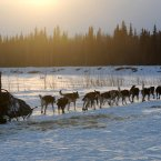 Veteran Iditarod musher Robert Bundtzen drives his team away.