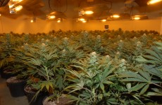 Pic: Two arrested after cannabis plants worth €2.5m seized