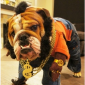 9 children and dogs who know how to celebrate Mr. T